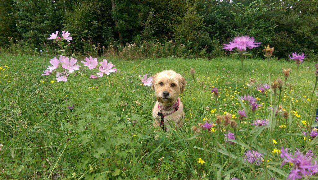 Urlaub mit Hund in Hessen