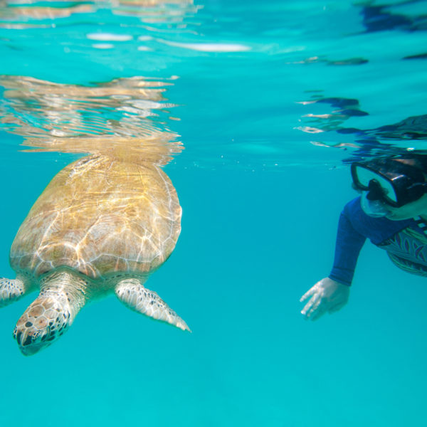 Swimming with turtle ©Barbados Tourism Marketing Inc. / Destination Satisfaction Award