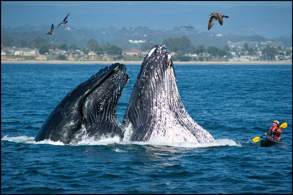 Wale beobachten bei einem Roadtrip
