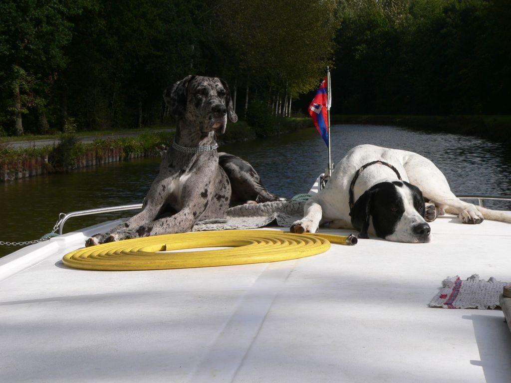 Vierbeiner bei Locaboat ©Locaboat Holidays