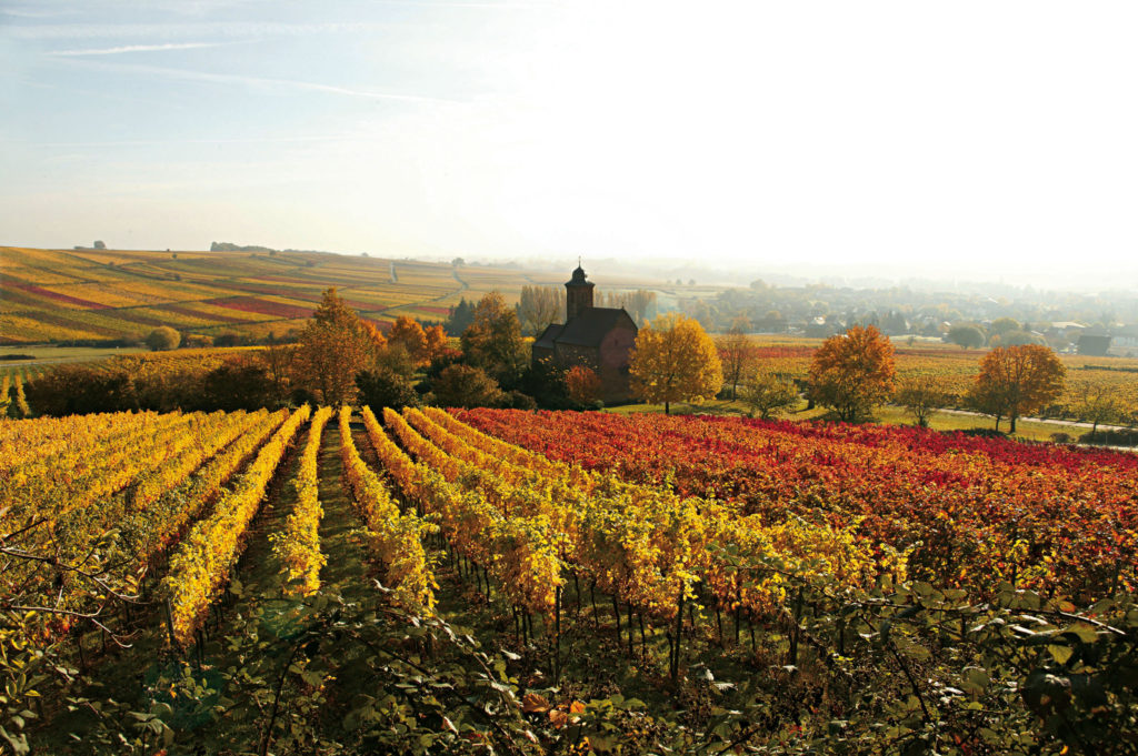 Herbstliche Weinberge bei Klingenmünster, Keschde-Zeit