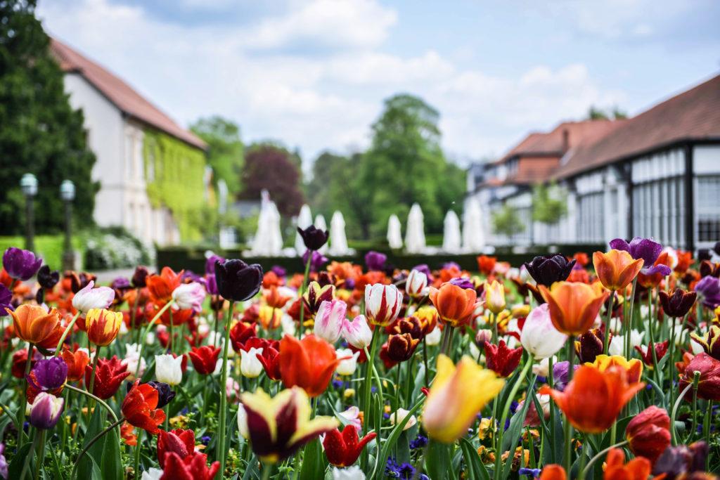 Frühlingerwachen ©Gräflicher Park
