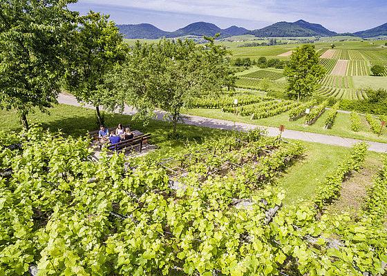 Picknick an der Südlichen Weinstrasse