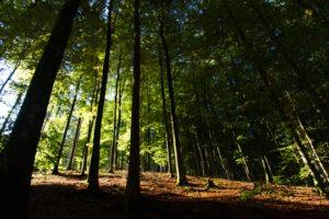 Wald baden